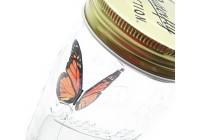 farfalla barattolo
