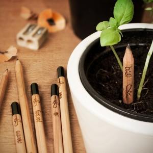 matita pianta